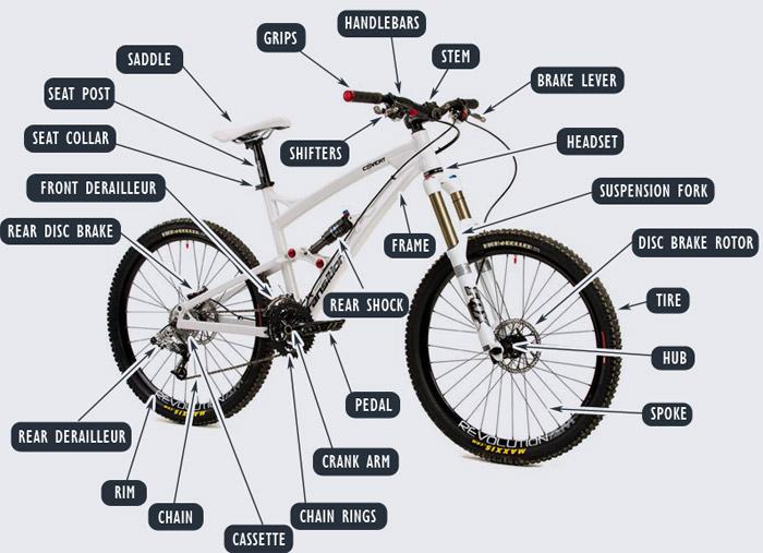 Großartig Mountainbike Anatomie Galerie - Anatomie Von Menschlichen ...